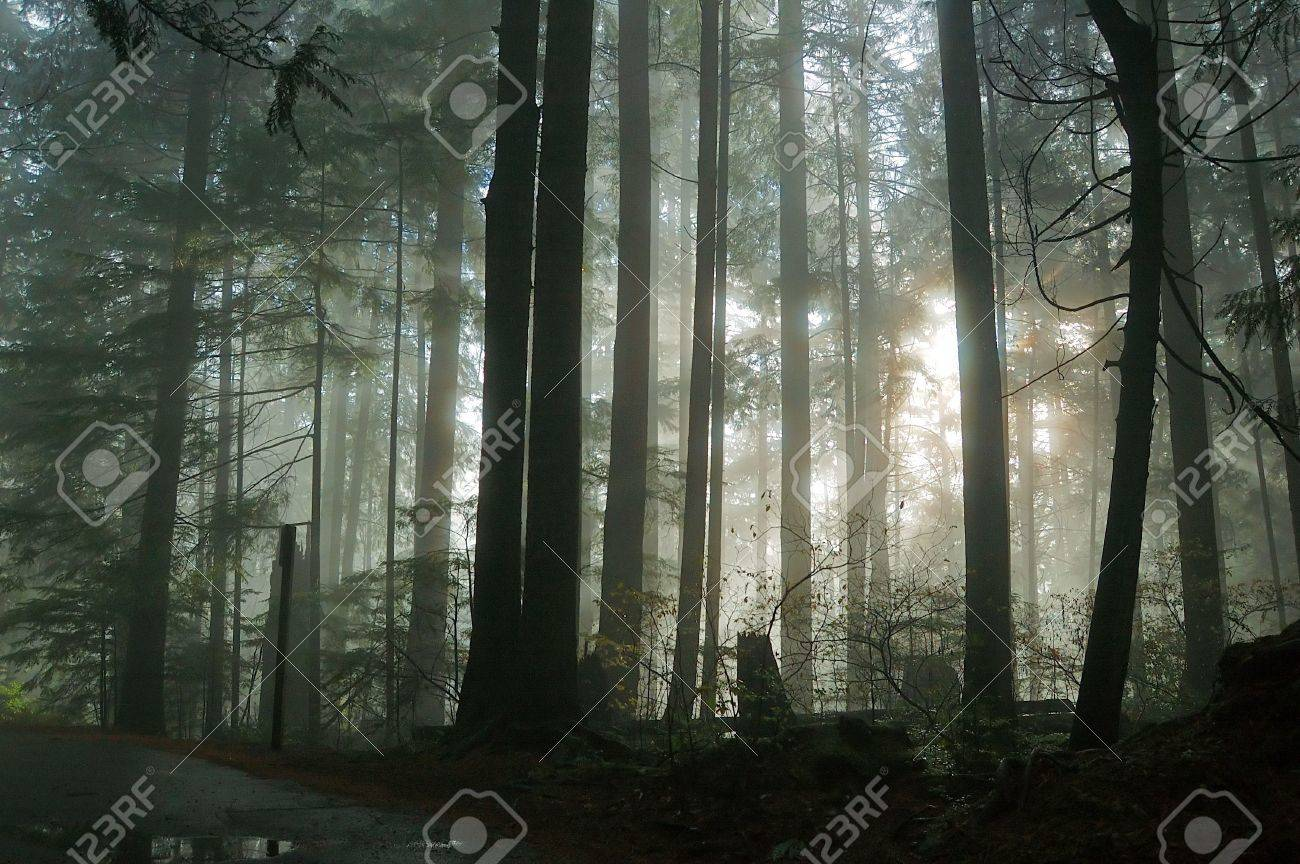 foggy forest Stock Photo - 3407390