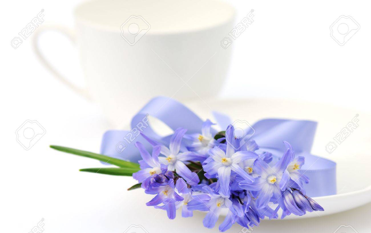 Blue Glory Of The Snow Flowers And White Tea Cup Stock Photo
