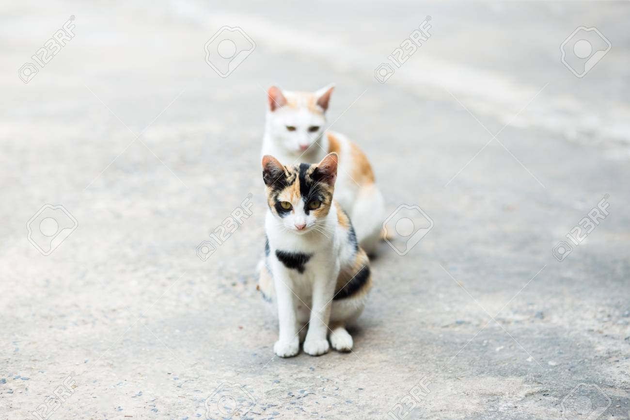 Two Cats Standing On The Cement Floor, Thai Cat Skin. Stock Photo ...