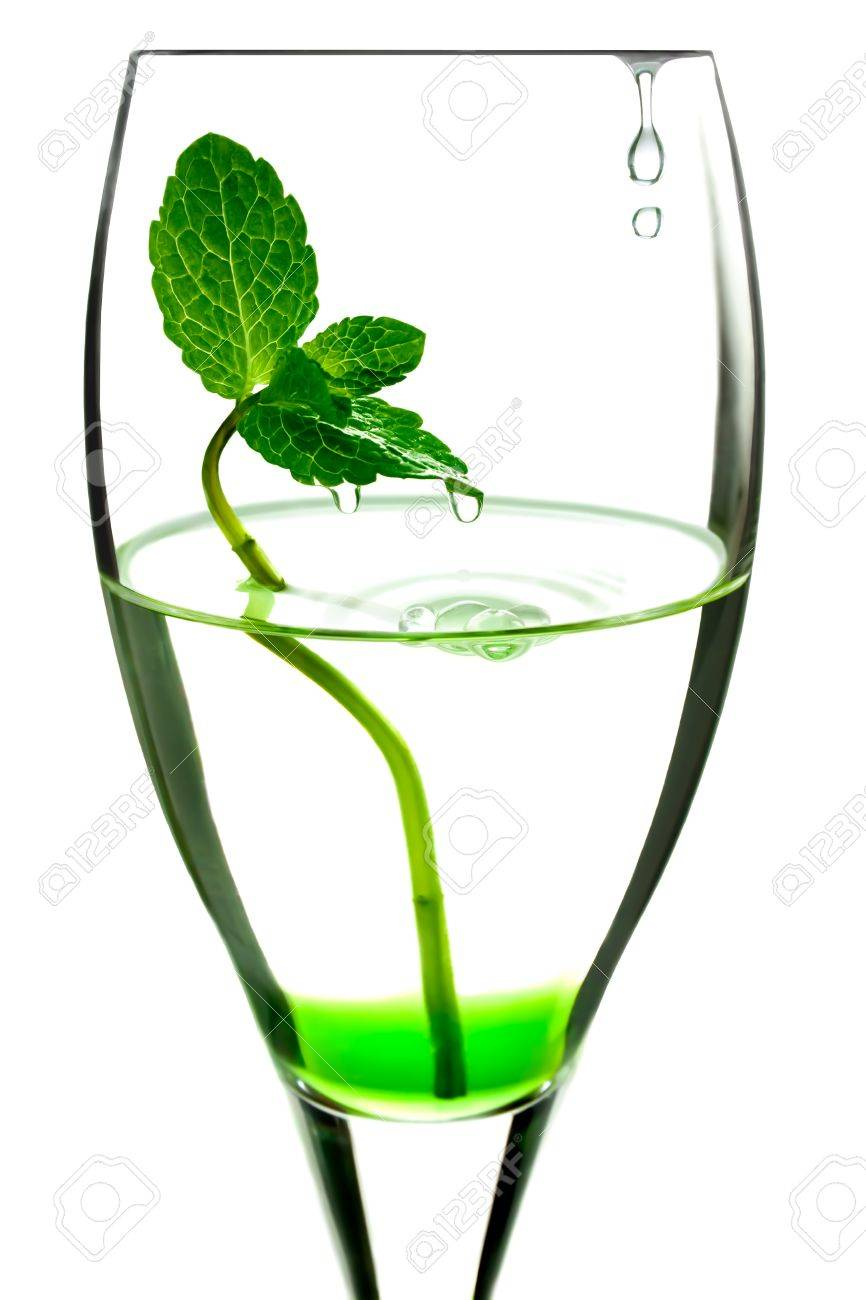 green mint in the wineglass with water and water drops Stock Photo - 12567285