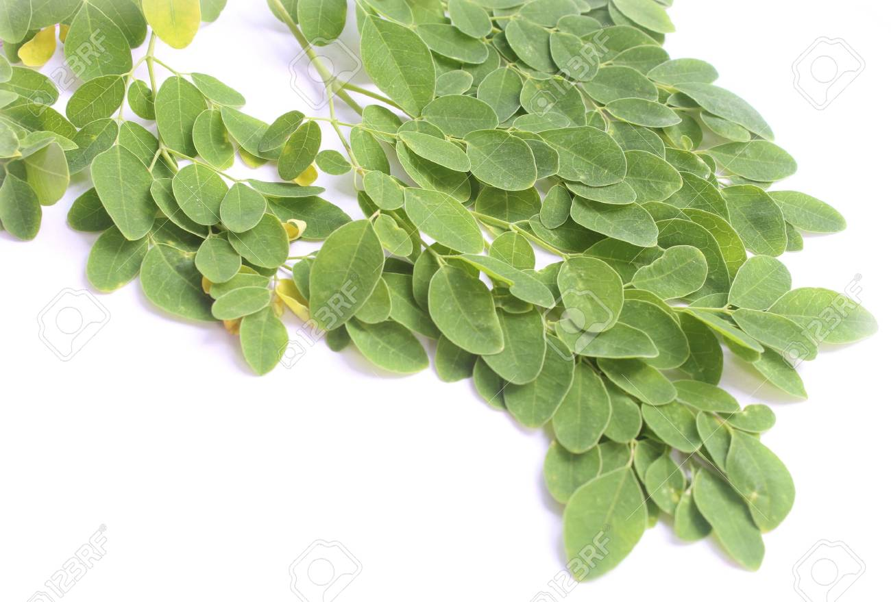 Edible moringa leaves over white background Stock Photo - 20430588