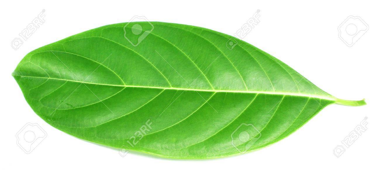 Herbal decorative leaves Stock Photo - 21907708