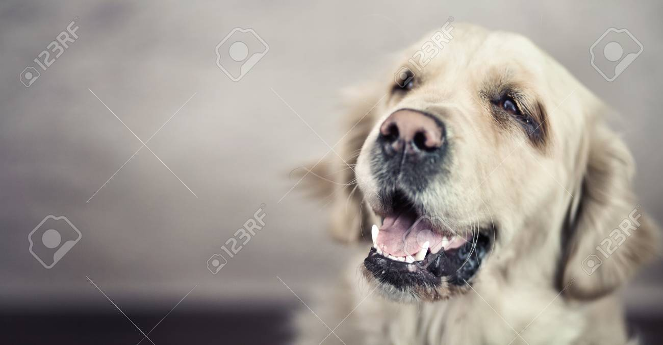 Picture presenting friendly nice pet Stock Photo - 18816640