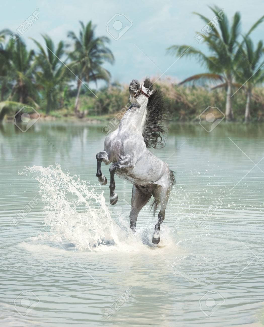 White Horse Jumping In The Vast Pond Stock Photo Picture And Royalty Free Image Image 29748300