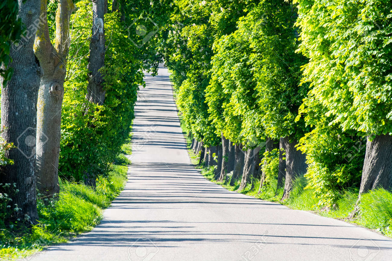 An alley of old trees somewhere in the countryside - 163917204