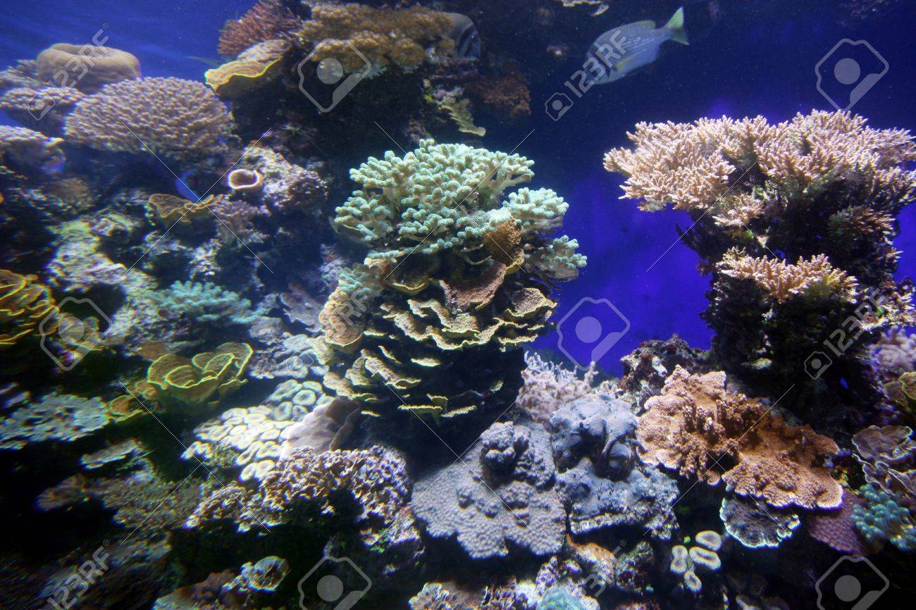 Coral reef in deep sea Stock Photo - 15834451