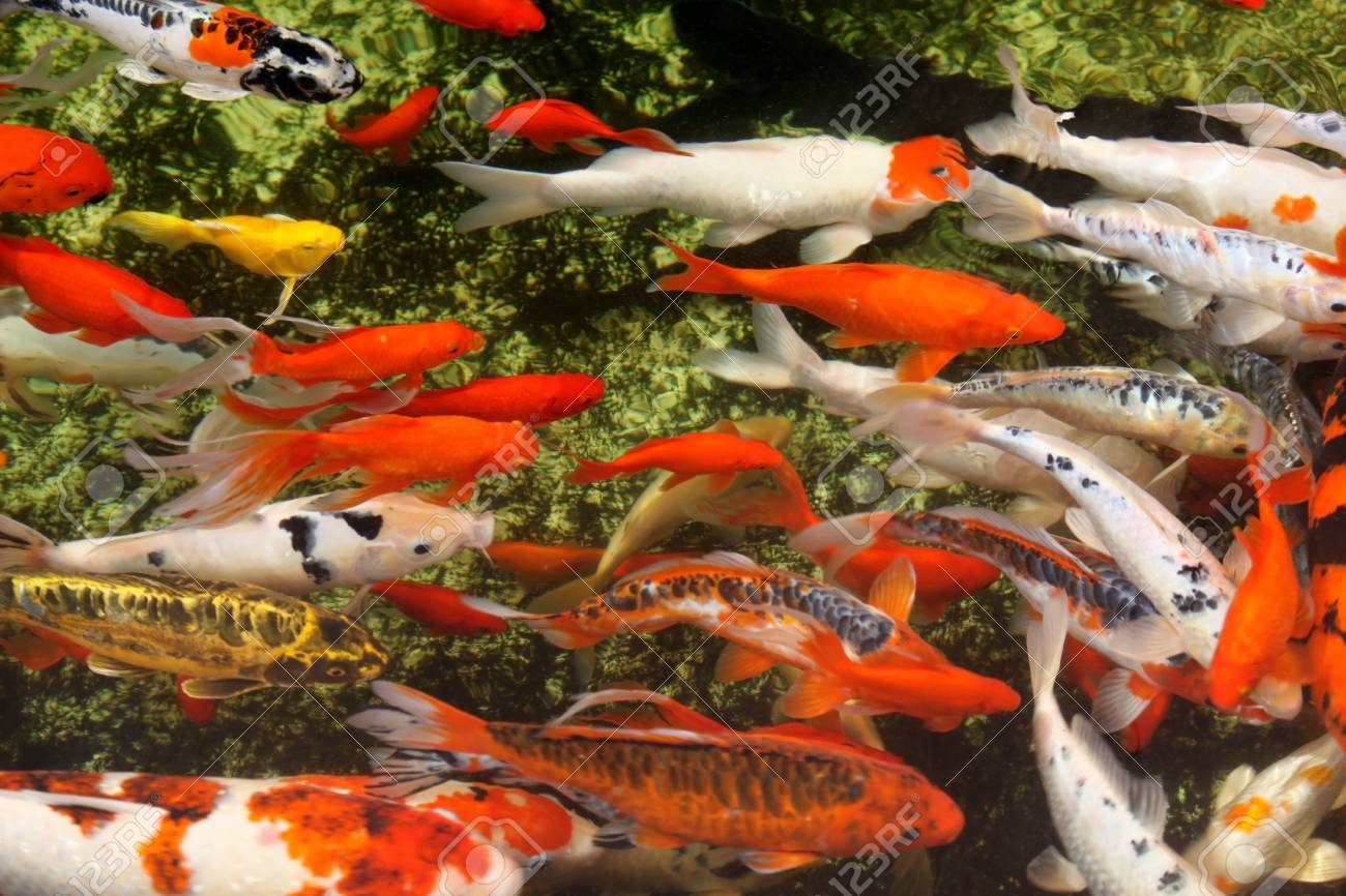 Tropical colorful fish Stock Photo - 15834931