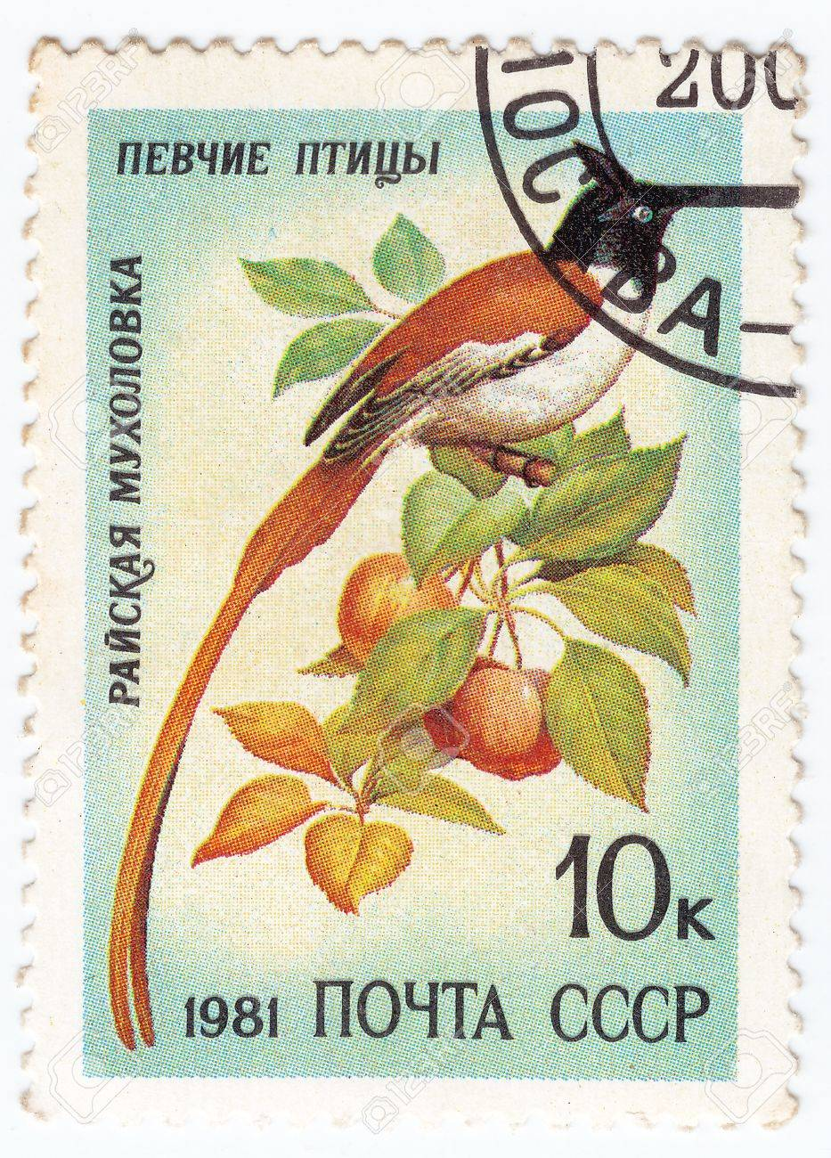 USSR - CIRCA 1981 : stamp printed in USSR show bird paradise fly cather, circa 1981 Stock Photo - 15908936