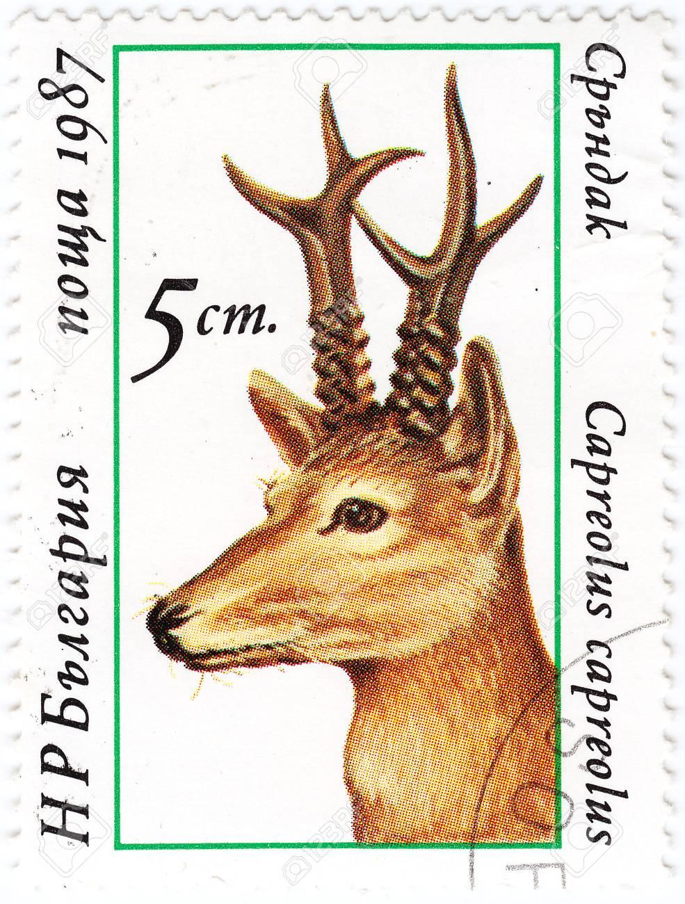 BULGARIA - CIRCA 1987 : stamp printed in Bulgaria shows European Roe Deer, circa 1987 Stock Photo - 15908947