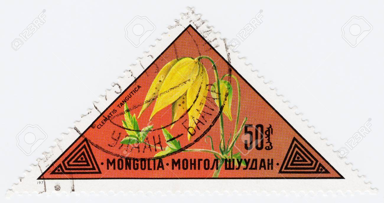 MONGOLIA - CIRCA 1973 : stamp printed in Mongolia shows a flower Clematis Tangutica, circa 1973 Stock Photo - 16239629