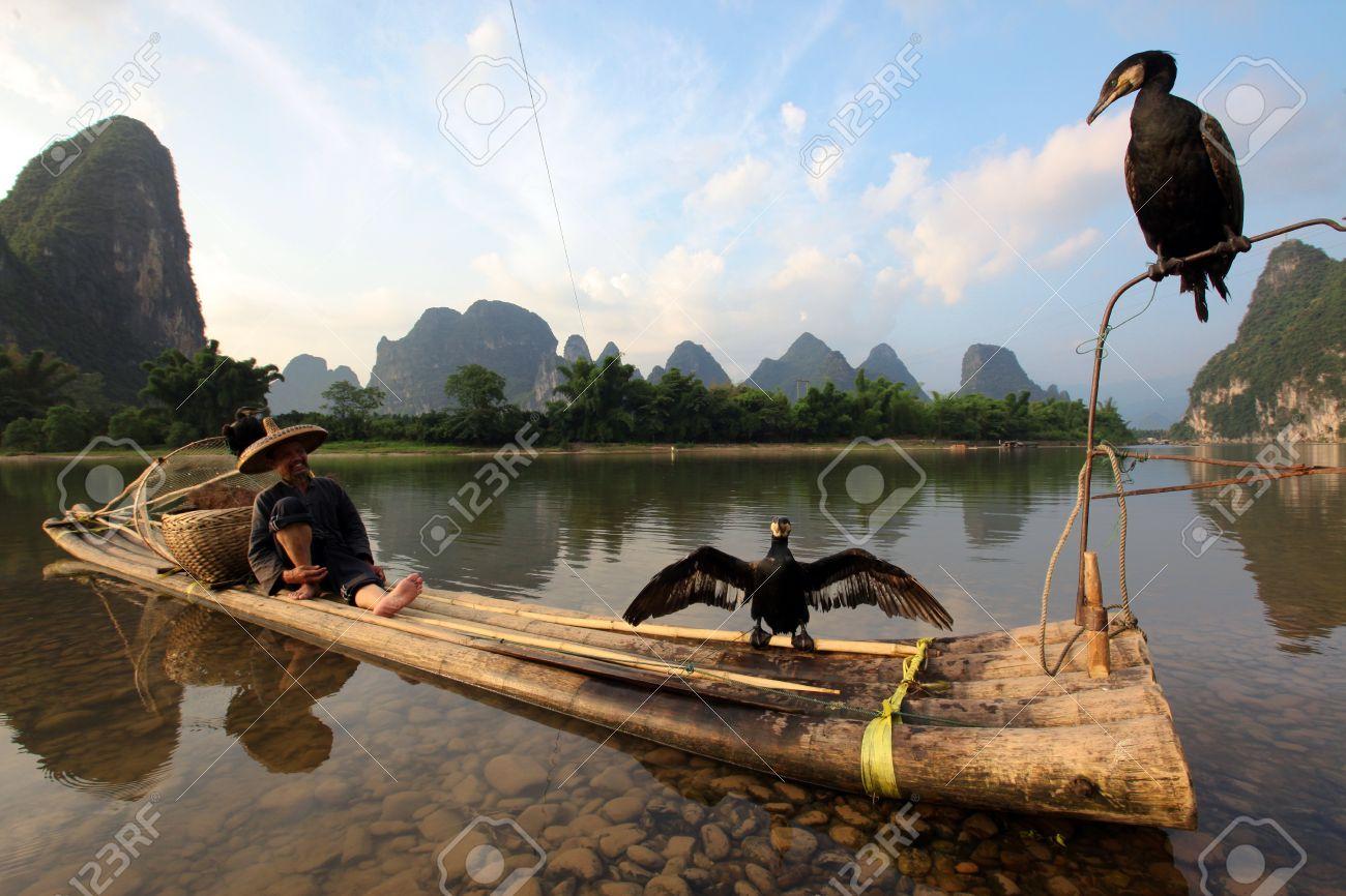 YANGSHUO - JUNE 18  Chinese Chinese man fishing with cormorants birds in Yangshuo, Guangxi region, traditional fishing use trained cormorants to fish, June 18, 2012  Stock Photo - 19348880