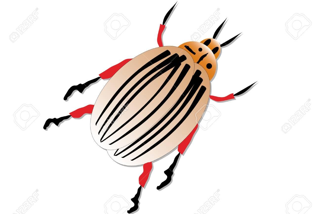 Colorado potato beetle, isolated. Stock Vector - 9917800