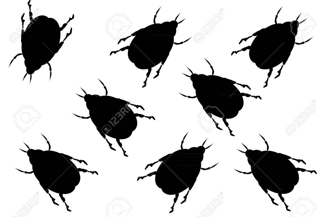 Black beetles on white background Stock Vector - 9917810