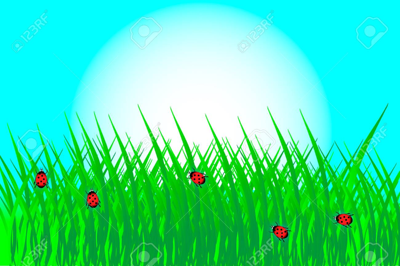 Green grass with ladybirds - vector Stock Vector - 10034428