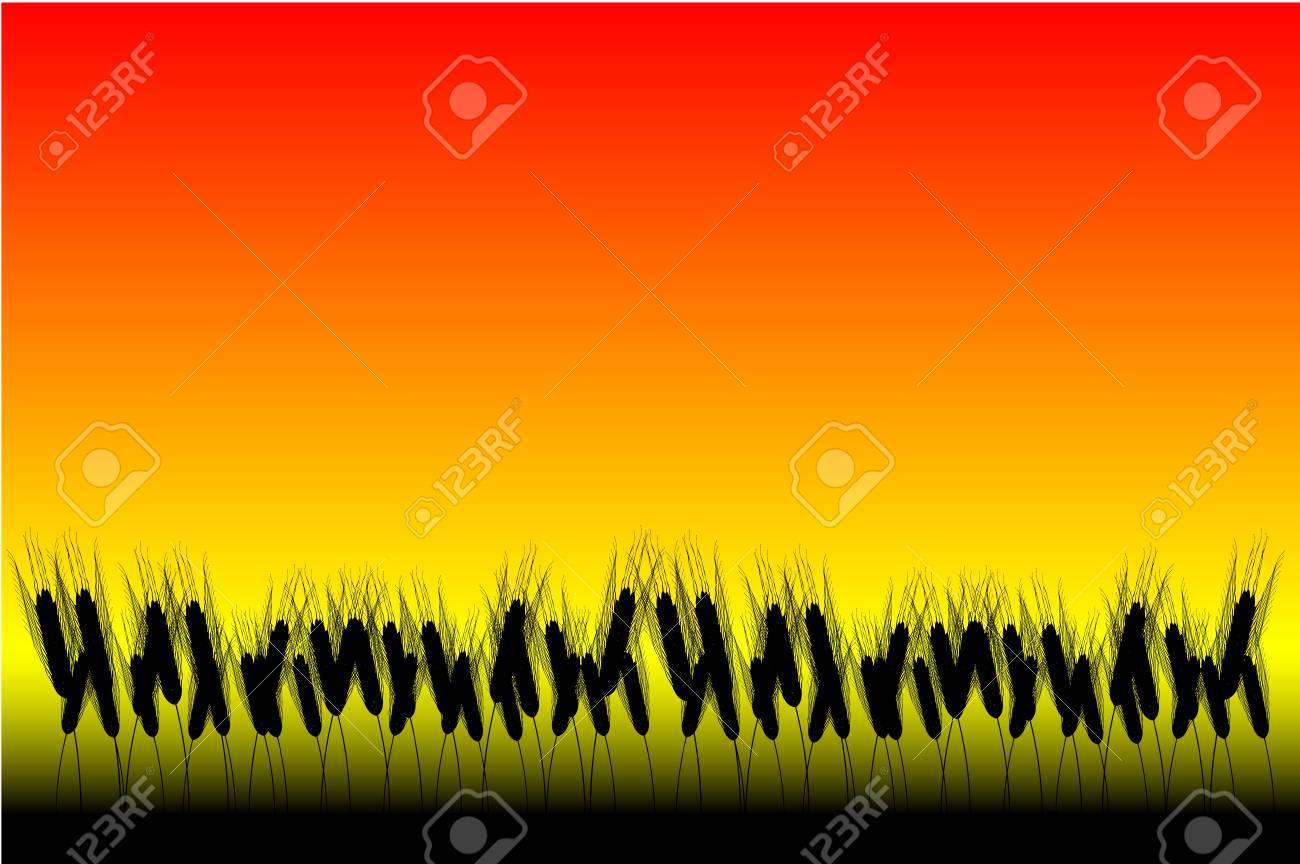 Field of wheat at sunset background - vector Stock Vector - 10228789