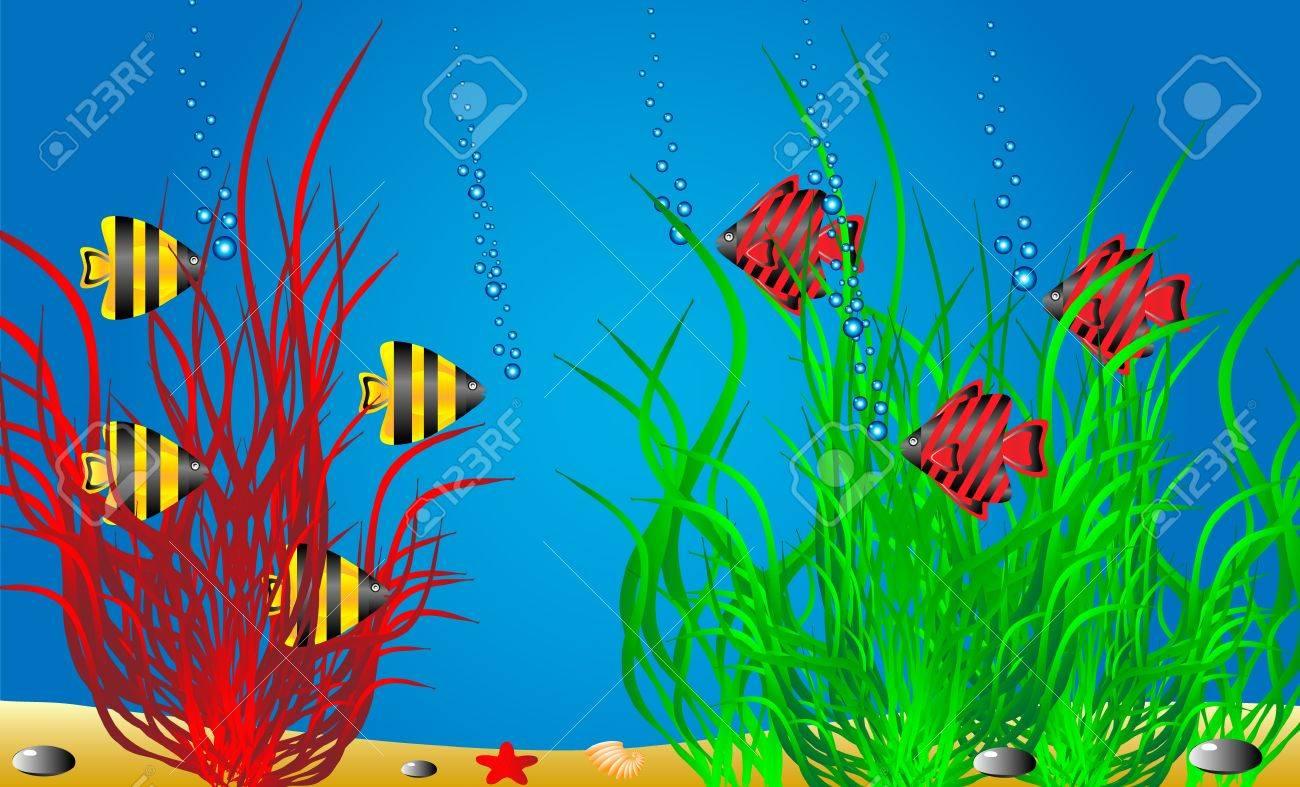 Vector illustration of a sea life . Stock Vector - 11087124