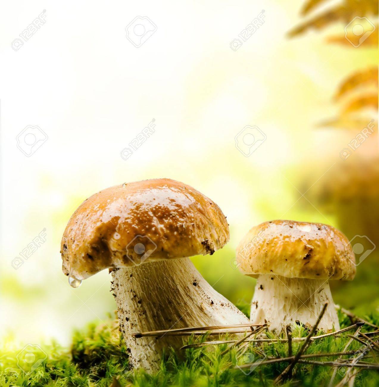 autumn forest mushrooms Stock Photo - 10542025