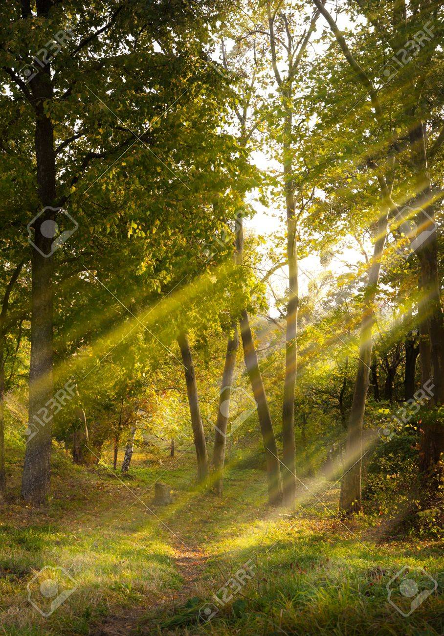 footpath in the autumn forest lit by sunlight Stock Photo - 10958858