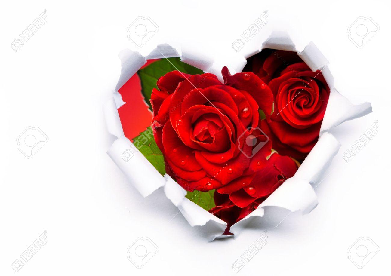 rosas corazones