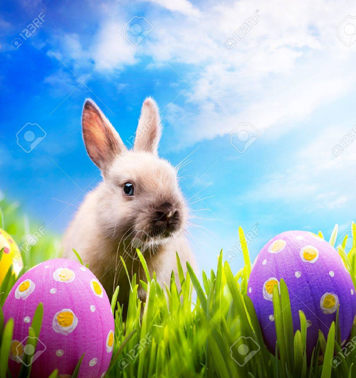 Easter Bunny With Eggs Photo Album - The Miracle of Easter