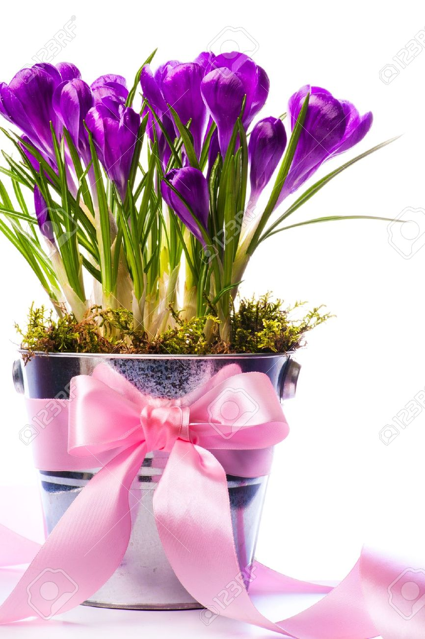 Beautiful spring flowers in bucket decorated with ribbon Stock Photo - 12464404