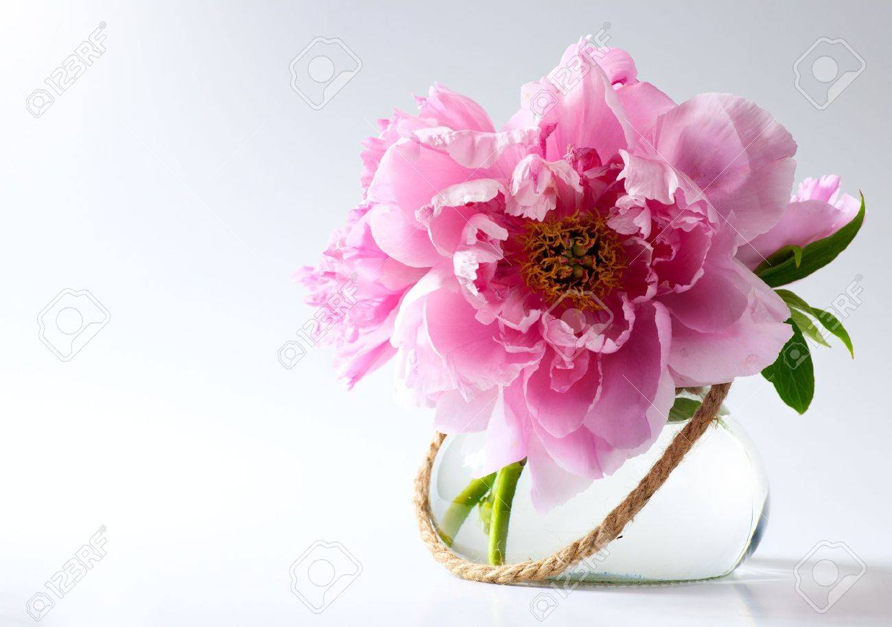 spring flowers in vase on white background Stock Photo - 13544971