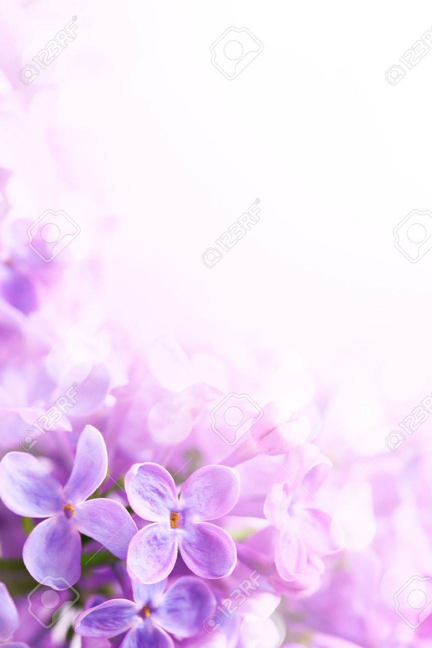 Spring Flowers Abstract Background Stock Photo Picture And Royalty
