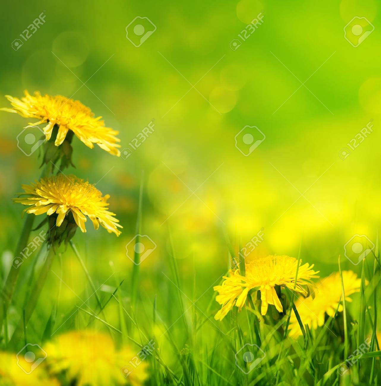 art Beautiful spring flowers background Stock Photo - 18019054