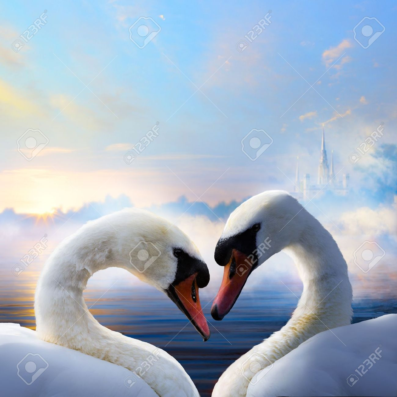 pair of swans in love floating on the water at sunrise of the day Stock Photo - 20937349