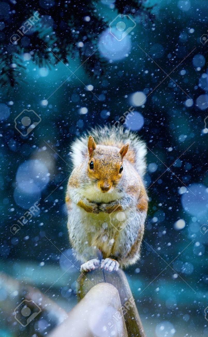 Weihnachten Eichhörnchen Erfrischungen Wartet Auf Einer Bank Im ...