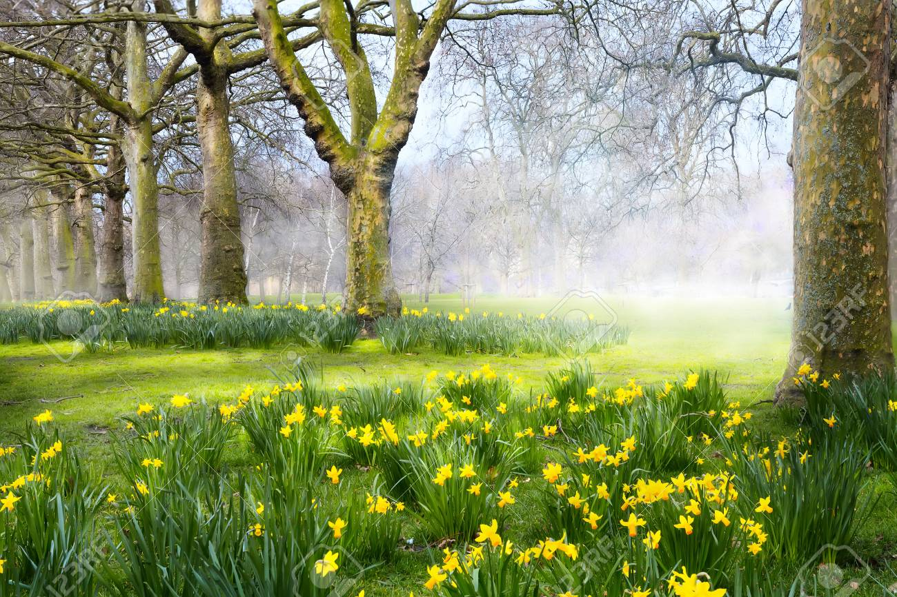 Art Spring Flowers In The English Park Stock Photo Picture And