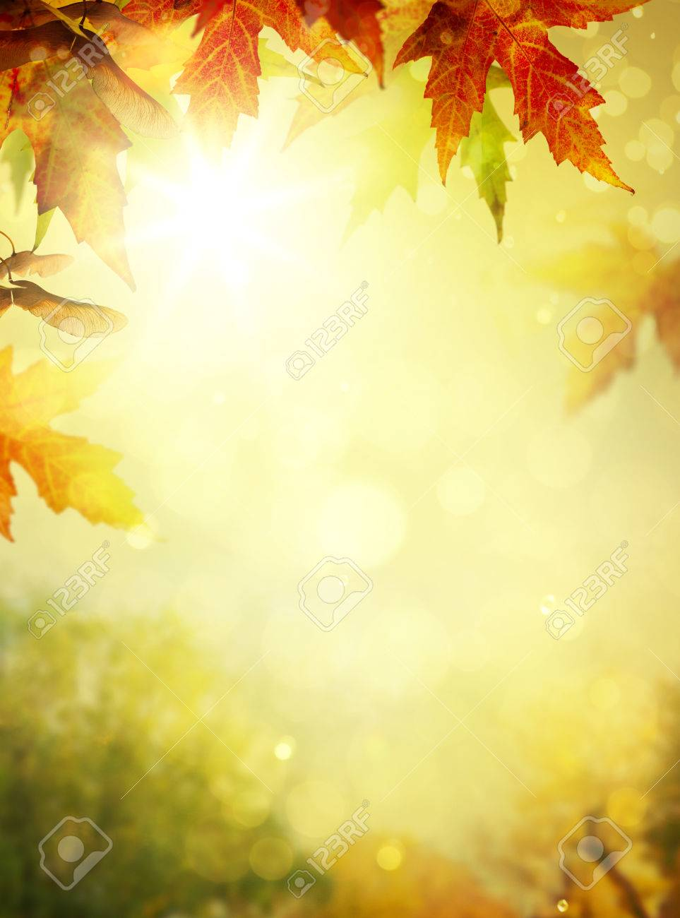 autumn leaves backgrounds colorful foliage in the autumn park stock