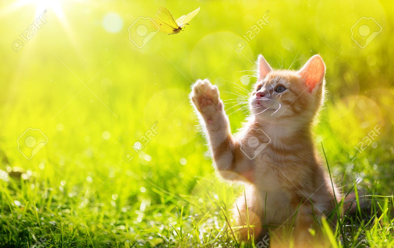 art Young cat / kitten hunting a ladybug with Back Lit - 45612249