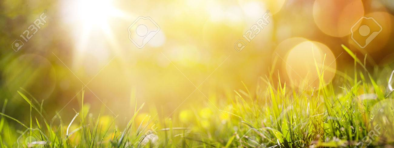 art abstract spring background or summer background with fresh grass Stock Photo - 53597403
