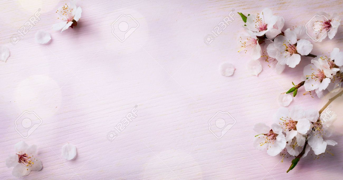 Art Spring Blooming Spring Flowers On Wooden Background Stock Photo