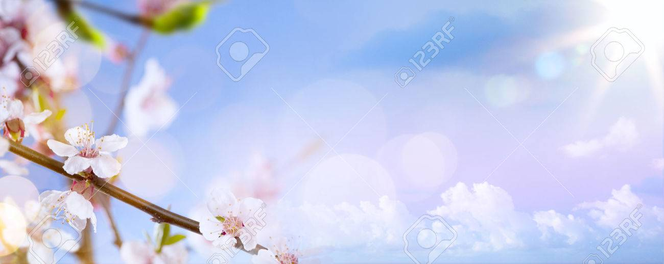 spring flowers on the blue sky background Stock Photo - 53598999