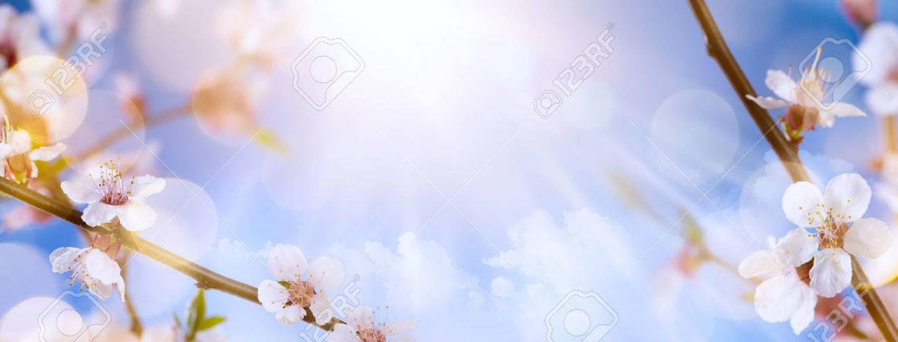 spring flowers on the blue sky background Stock Photo - 53599007