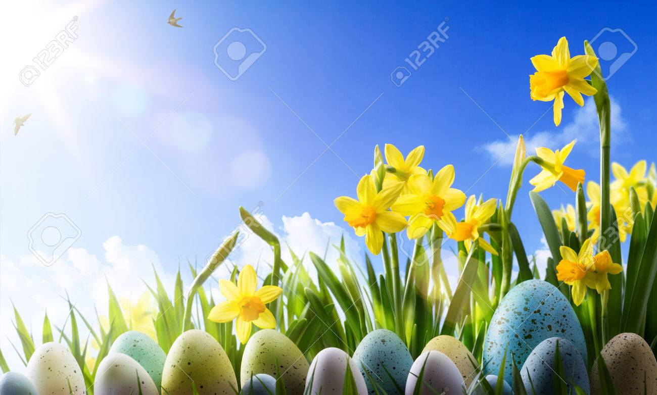 Easter background; Spring flowers and easter eggs Stock Photo - 53827725