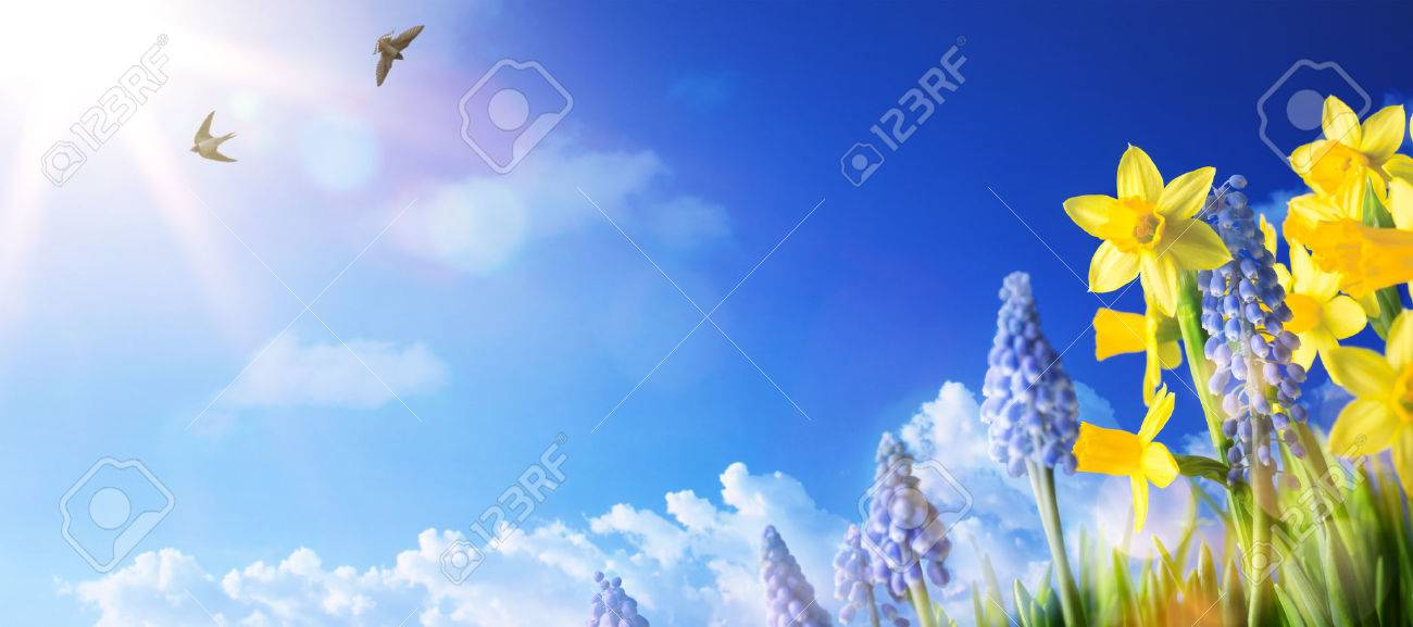 Easter background with fresh spring flowers Stock Photo - 54142378