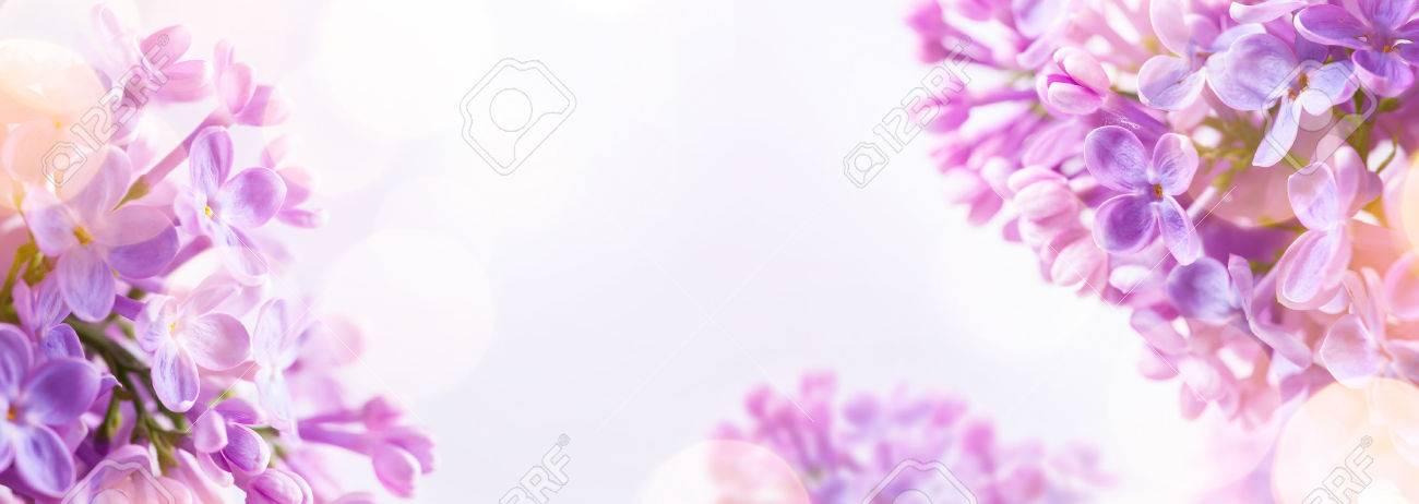 Spring background with fresh spring flowers stock photo picture and spring background with fresh spring flowers stock photo 56306974 mightylinksfo
