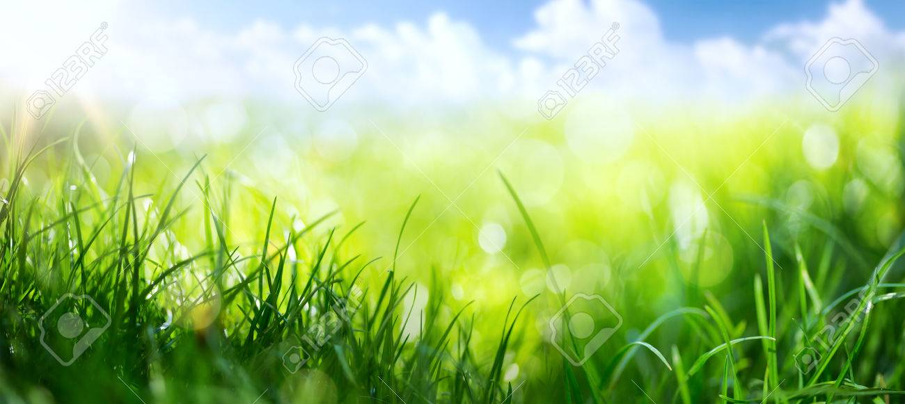 art abstract spring background or summer background with fresh grass Stock Photo - 70655540