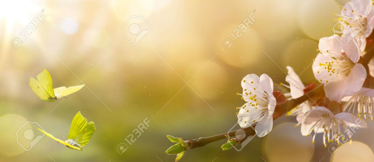 spring flower background easter landscape stock photo picture and