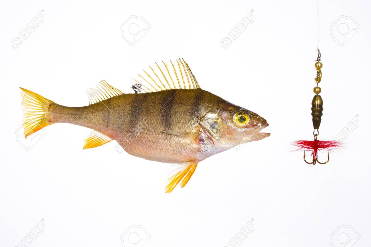 Fish on the hook Stock Photo - 5726031