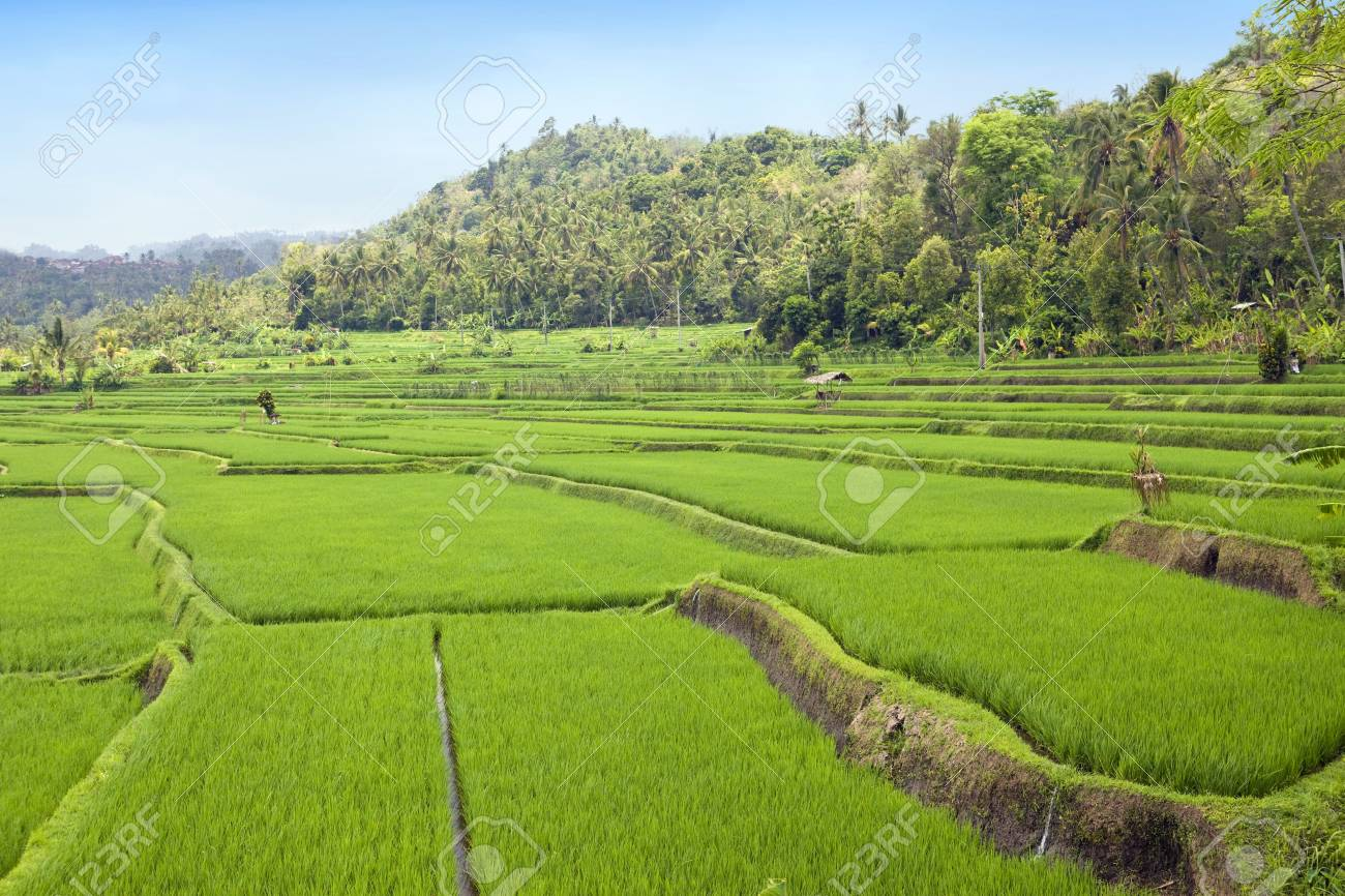 Kind on rice terraces, Bali, Indonesia Stock Photo - 6517435
