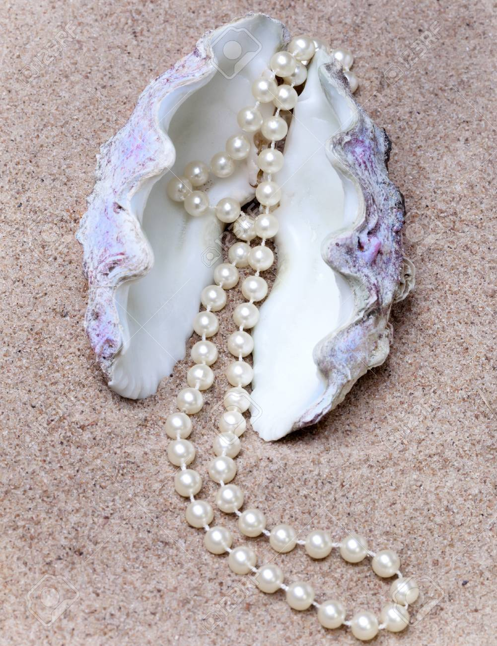 Pearl and shell Stock Photo - 12923377