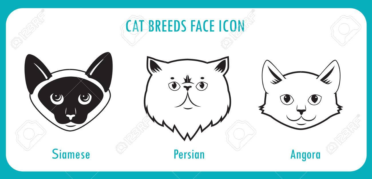 Cat Breeds Face Icons Angora Persian Siamese Black And White