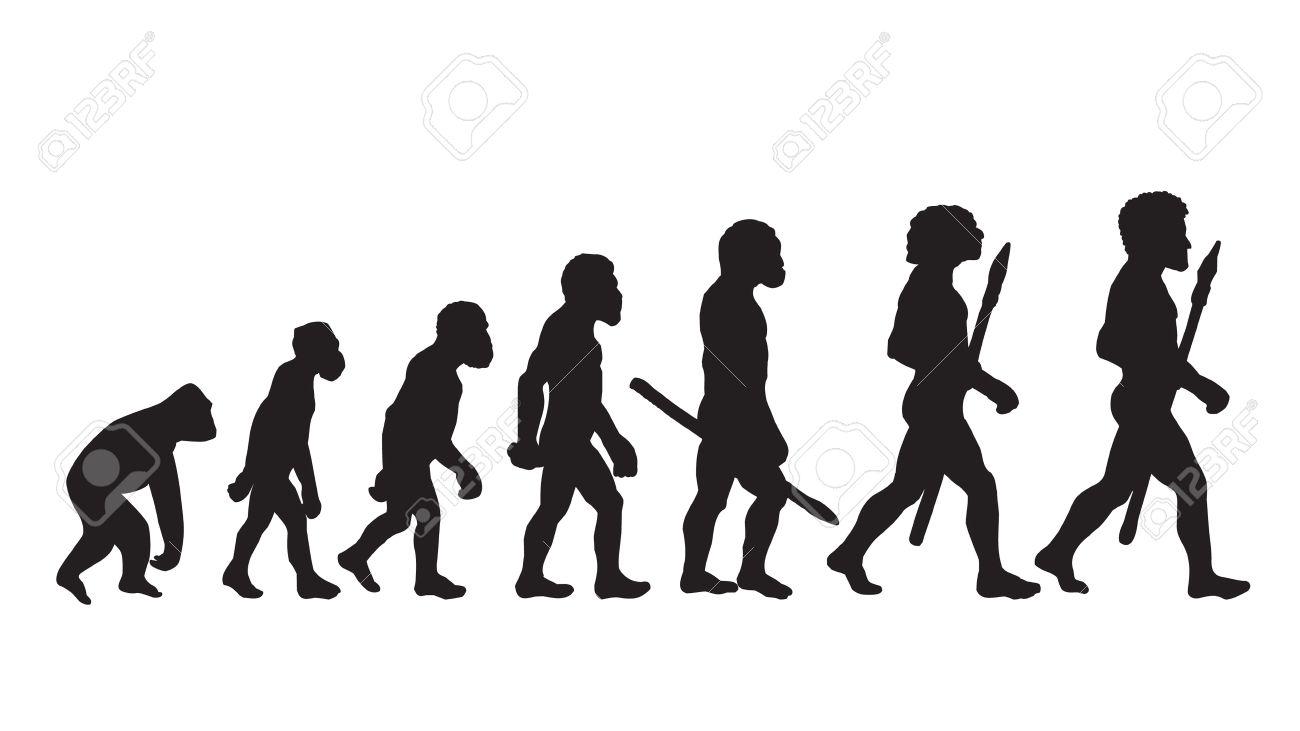 human evolution. human evolution chart. human evolutionary biology