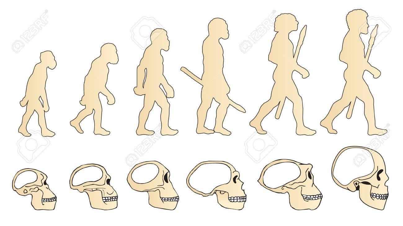 Evolution of the skull. Human skull. - 67692634