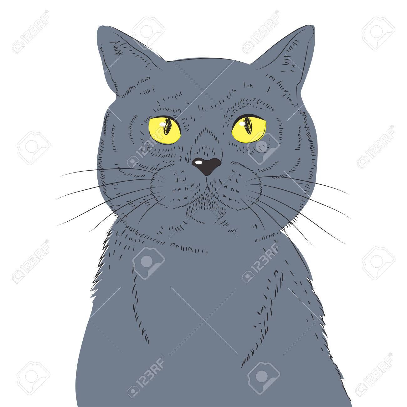 British Shorthair Cat Hand Draw Vector Sketch Illustrations
