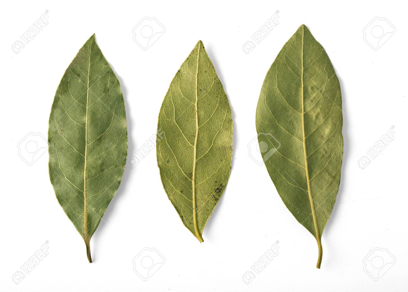 Dried bay leaves isolated on white with clipping path - 65381128